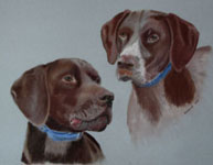 Pair of German Pointers