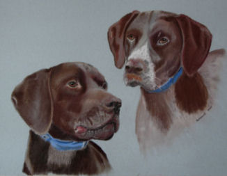 German Pointers Portrait